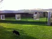 Capturing the pooch twice at Castello di Ama