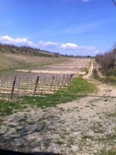 Vineyard at Castello di Ama, Tuscany