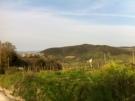 Barolo area