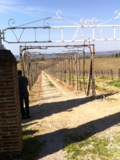 At San Felice in their Pugnitello vineyard