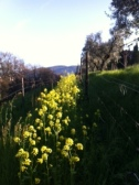 Floral beauty at Santa Caterina