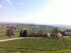 Barolo from Bricco delle Viole