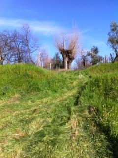 Natural pastures at Santa Caterina, Liguria