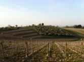 Castello di Ama in Chianti Classico