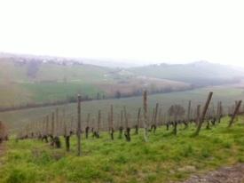 The Colli Piacentini at Castello di Luzzano (borders Emilia Romagna and Lombardia)