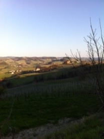 Afternoon sun at Barolo