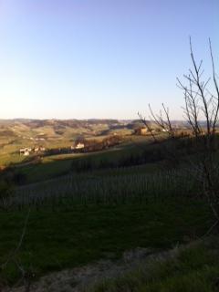 Afternoon sun at Barolo