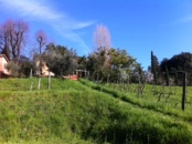 The Santa Caterina Ligurian property on the most magical day