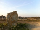 A large rock in the middle of the Bellavista vineyard at Castello di Ama